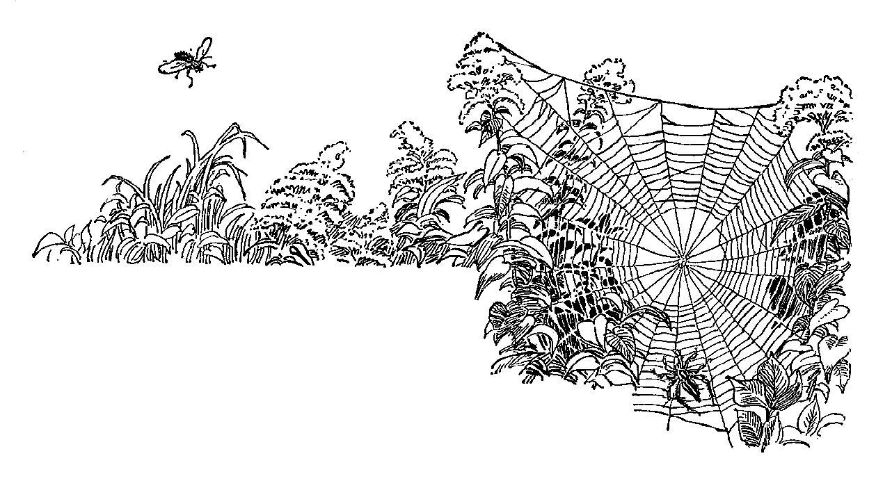 Corner spider web design - photo#23