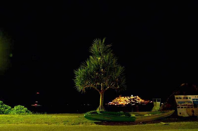 pine tree on beach at night