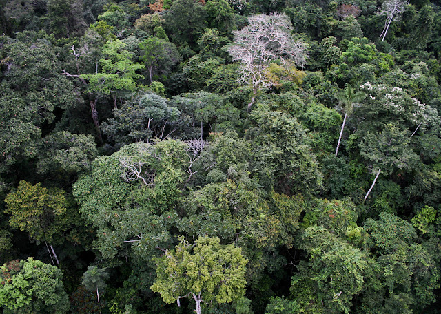 Global forest network cracks the case of tropical biodiversity