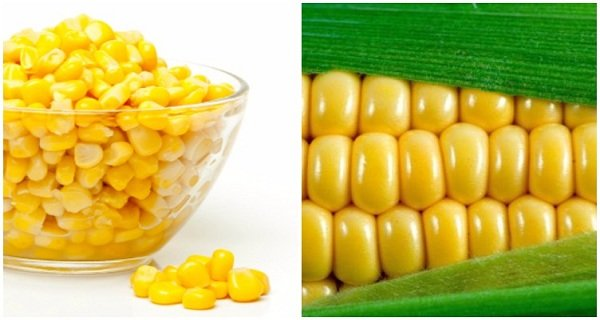 Shocking Truth About Corn