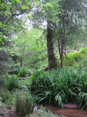 Stream at bonsai garden