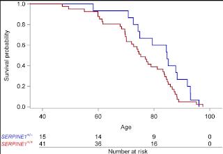 SERPINE1 mutations confer longer lives