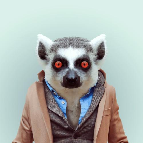 Hilarious Zoo Portraits