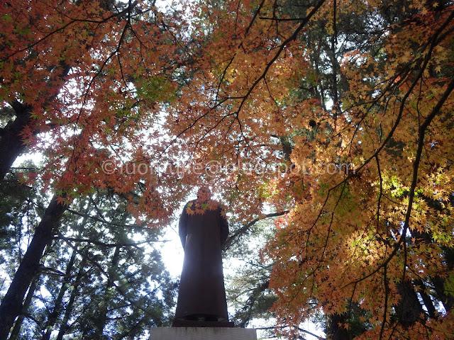 Fushoushan Farm maple autumn foliage