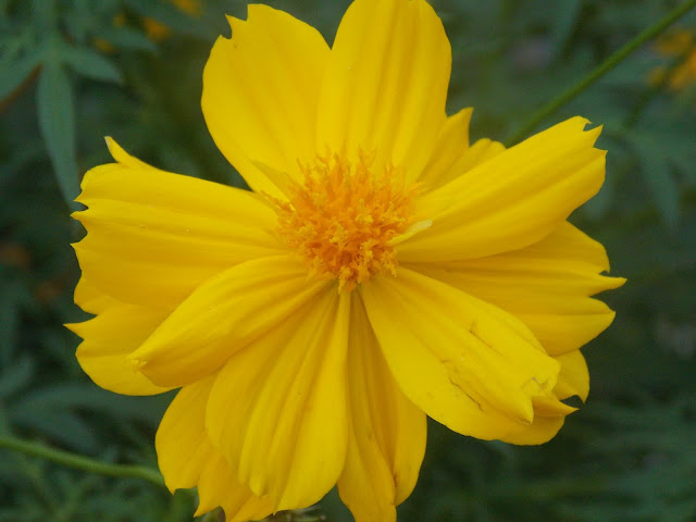Yellow flower image