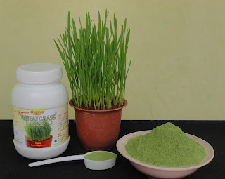 Girmes Wheatgrass