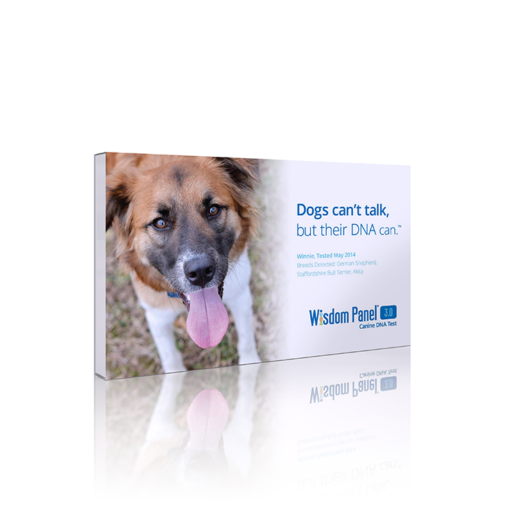 "Check out how you can get ""answers"" from your pooch and find out all the details on how a Doggy DNA test could save your pup's life!"