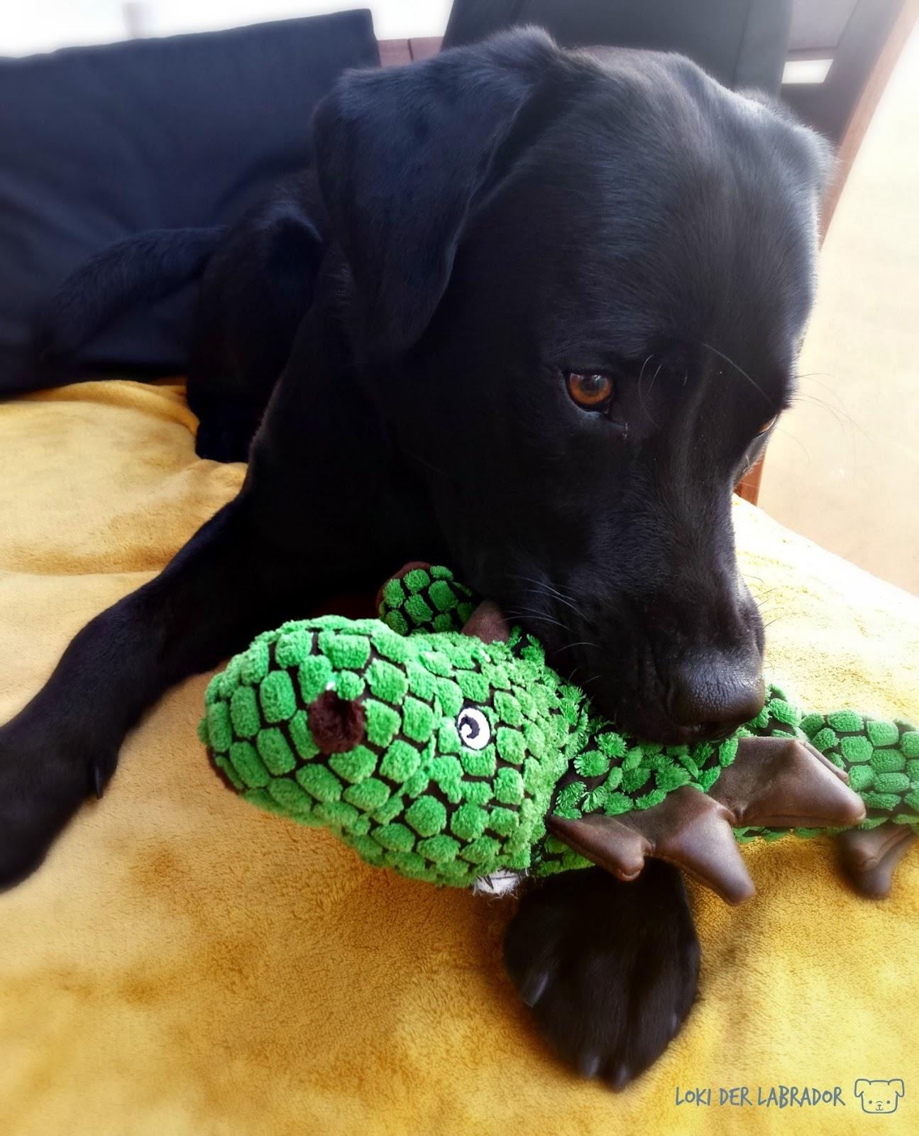 Monatsfavorit Schwarzer Labrador mit Dino Drache