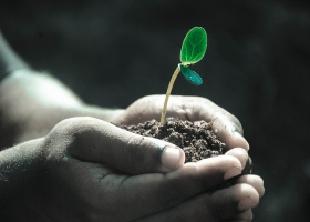 Holding a seedling with it's soil in the hand.