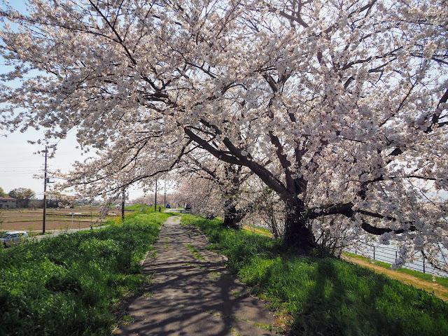 比企自転車道(川島こども動物自然公園自転車道)梅ノ木古凍貯水池