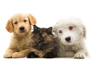 odpowiedni nawilżacz gdy w domu są zwierzęta