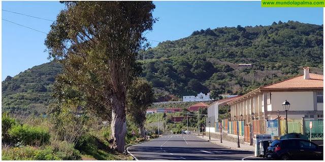 CC consigue el correcto mantenimiento de los eucaliptos en la travesía de Puntallana tras años de abandono