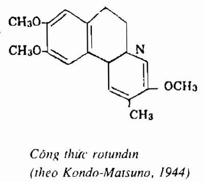 Thành phần hóa học CÂY BÌNH VÔI - Stephania rotunda - Nguyên liệu làm Thuốc Ngủ, An Thần, Trấn Kinh