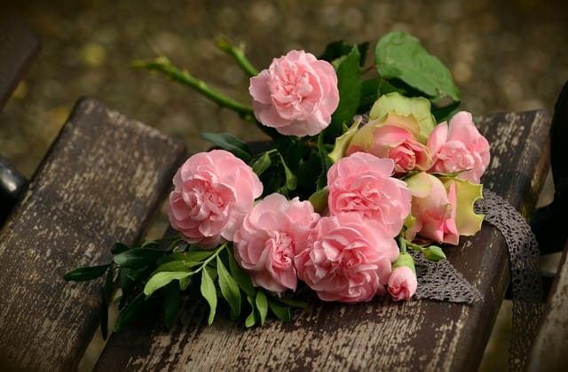 Ini Loh Makna Dari Bunga Mawar Pink yang Gak Disangka-sangka