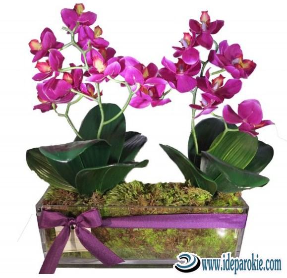 Cara Budidaya Bunga Anggrek Dalam Pot  Tempat, Ketinggian, Bibit, Perlakuan, suhu dan Memindahkan