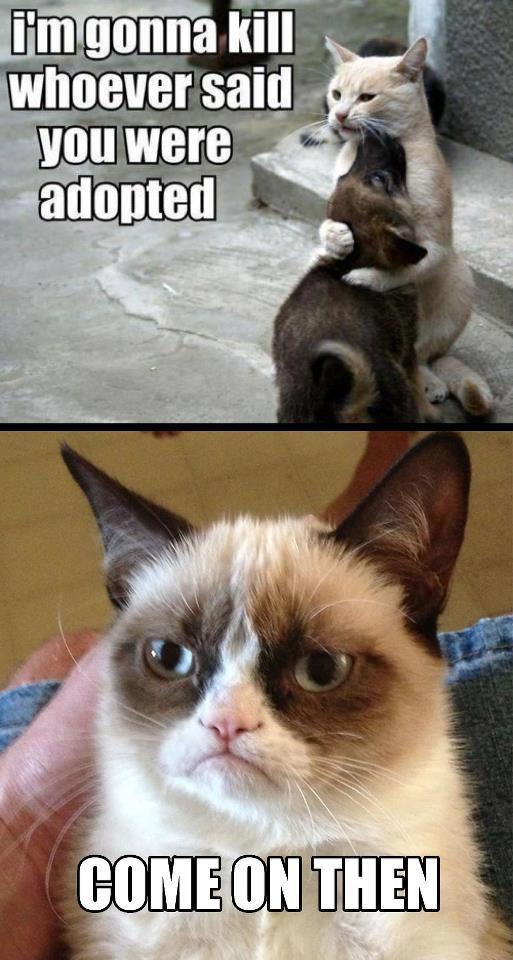 Christmas In July Cat Meme.Grumpy Cat Part 2 Funny Grumpy Cat Memes
