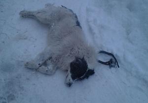 фото застреленной собаки
