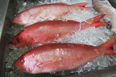 Is Red Snapper good for you?