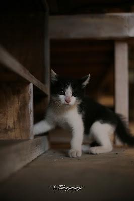 益子焼き 陶芸家 作家 猫 ネコ