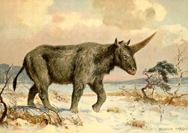 A long-extinct animal known as the Siberian unicorn - which was actually a long-horned rhinoceros - may have walked the Earth 29,000 years ago, at the same time as prehistoric humans, researchers say.