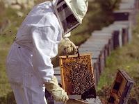 riscos na apicultura