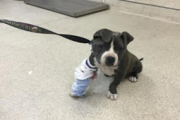 Her suffering will end with euth, 9 weeks old pup will die unless someone cares