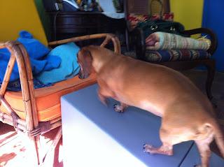 rampas para cães patas curtas