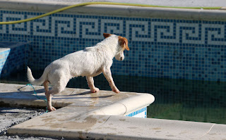 Thelma looking at her toy, in the swimming pool