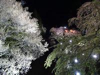 Ueda Castle cherry blossom