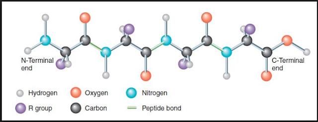 Struktur Umum Protein