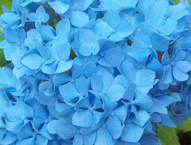 Cute Wallpaper In Twitter Im 225 Genes De Flores Y Plantas Hortensias
