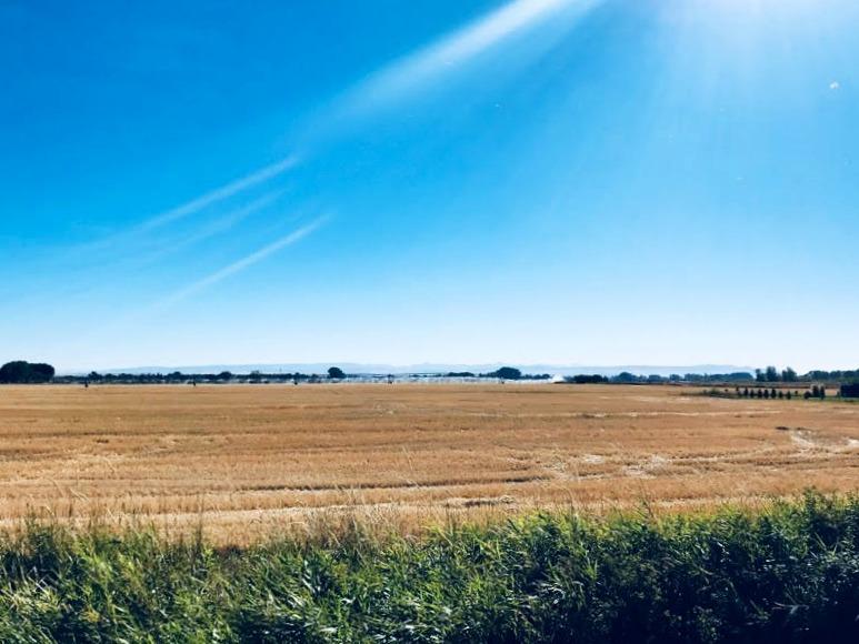 Idaho-farm-wheat-fields-snake-river
