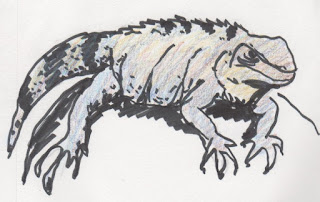 drawing of a Mexican Iguana by David Borden (c) 2015