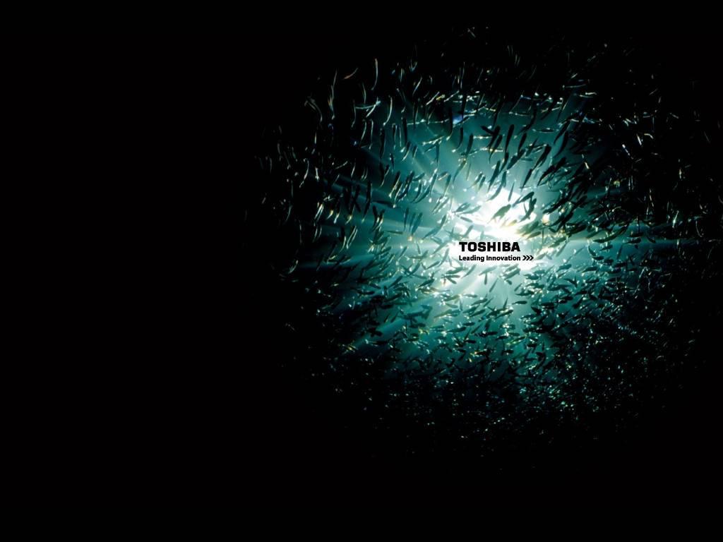 Shiba Satellite Laptop Wallpaper X HD