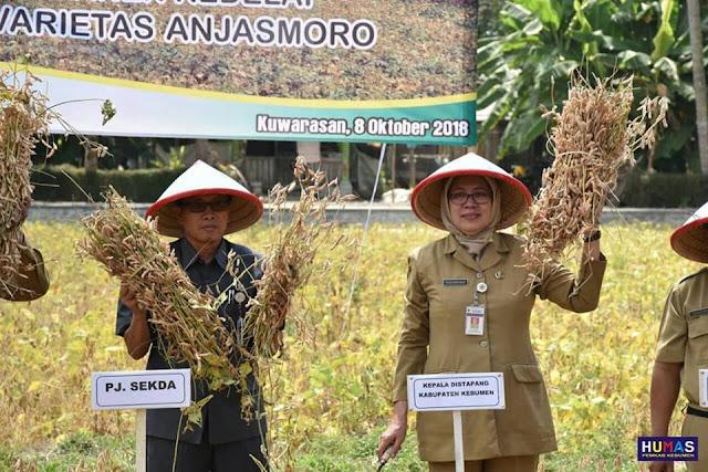 Lampaui Target, Produktivitas Kedelai di Kebumen Capai 1,72 Ton Per Hektar