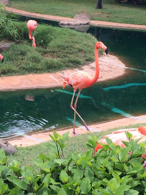 What To Do In Hawaii Honolulu Zoo travel Planet Weidknecht