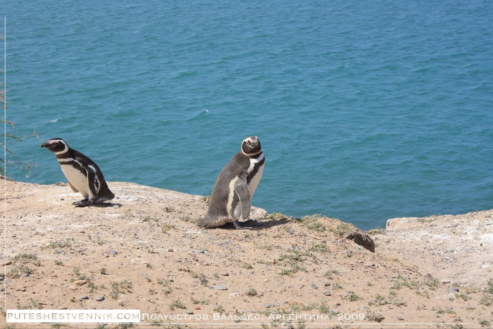 Пингвины и синий океан