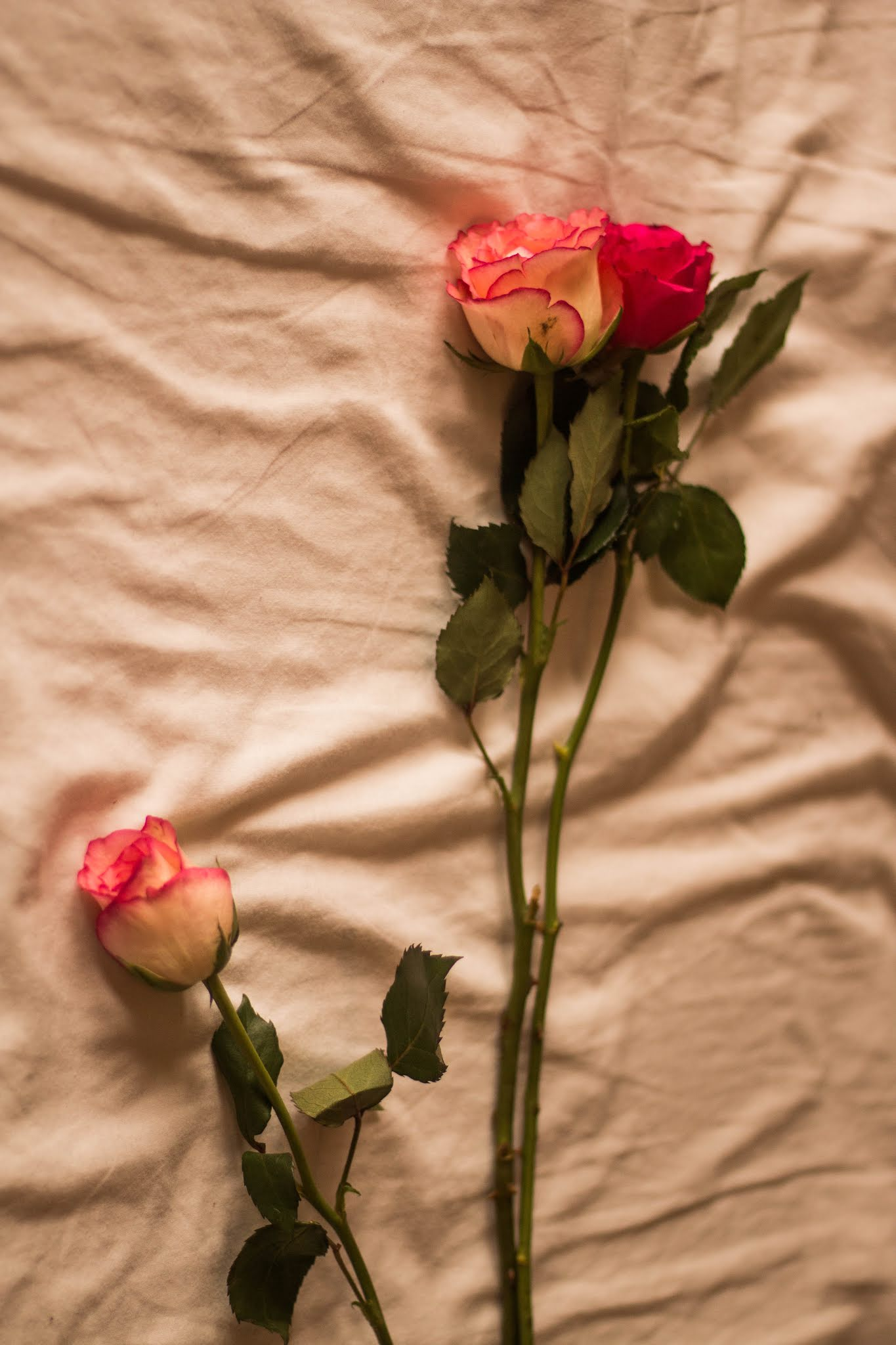 Roses on bedsheets - an outlook on love, valentines day blog post