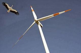 turbinas eólicas y muerte de pájaros