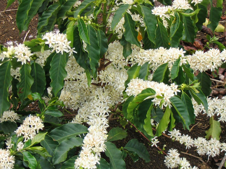 Do Grow Where Trees Coffee