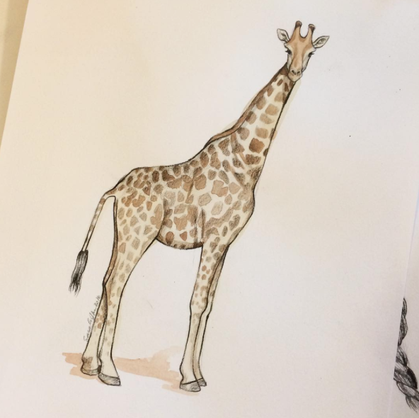 illustrated-giraffe