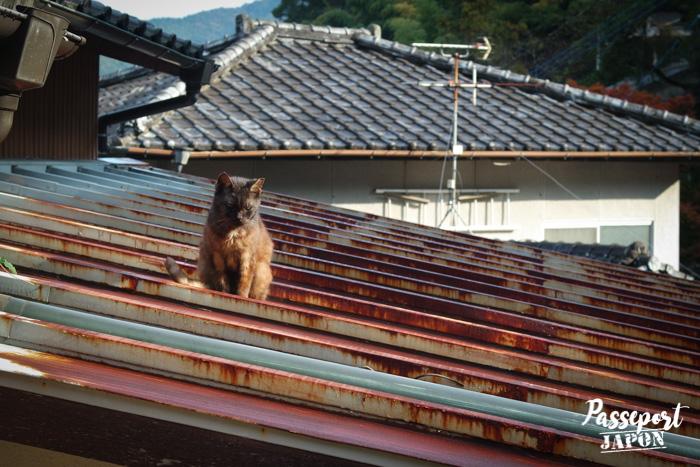 Chat sur les toits, Teramachi, Nagasaki