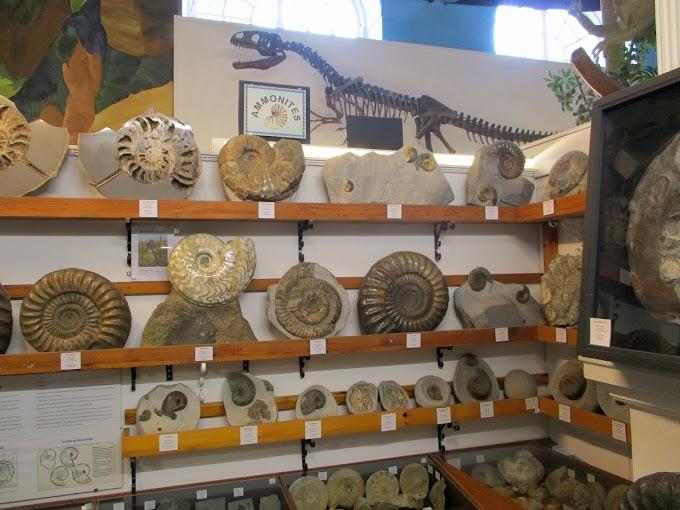 Dinosaurland, Lyme Regis
