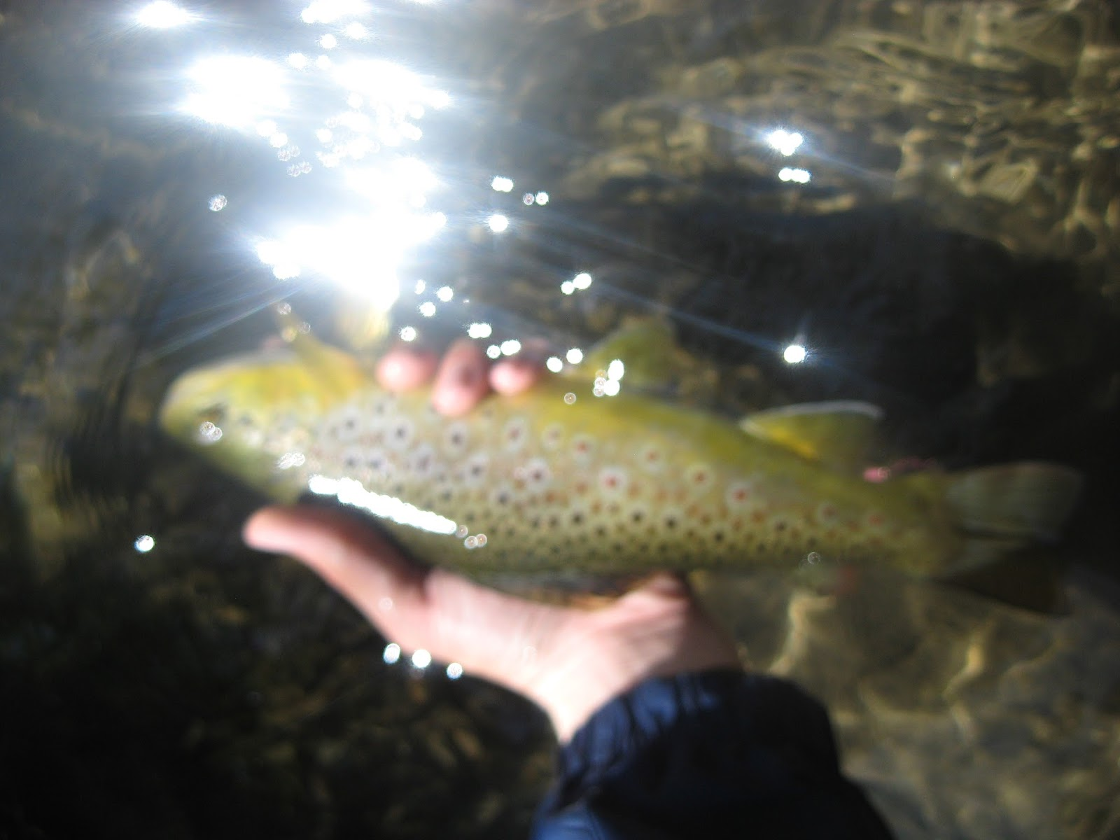 Minnesota driftless fly fishing trip report fishin 39 this for Driftless fly fishing