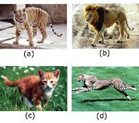 Keanekaragaman Makhluk Hidup Tingkatan