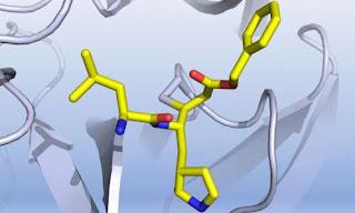 drug morphology