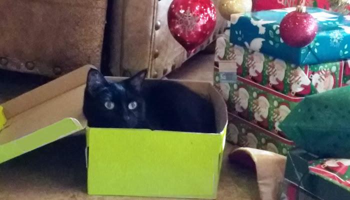 Meow-y Christmas!