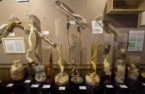 Phallological Museum, Islandia