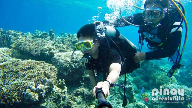 Best Diving Spots in Anilao Batangas