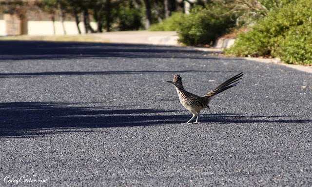 Road Runner - Austin, TX